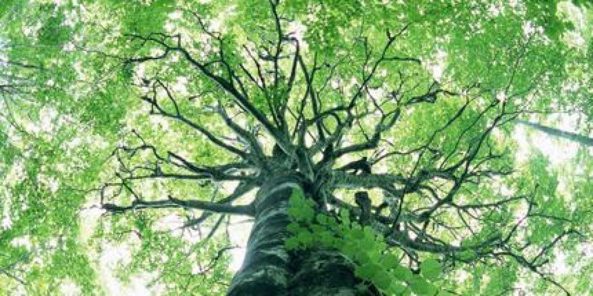 Artigo: Sentença não dá em árvore